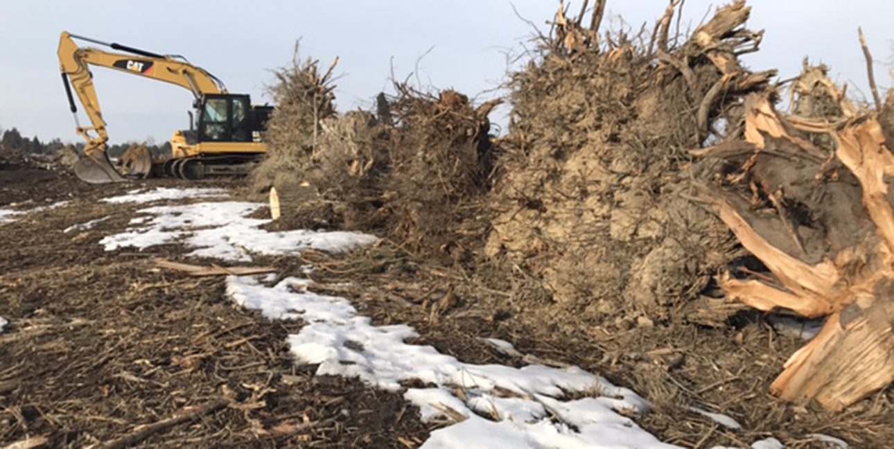 Several trees lay uprooted next to an excavator